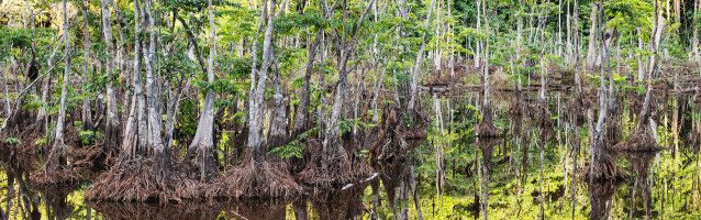 Story: Suriname - Into the wild