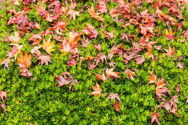 Kyoto_autumn_1