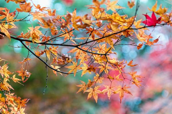 Kyoto_autumn_23