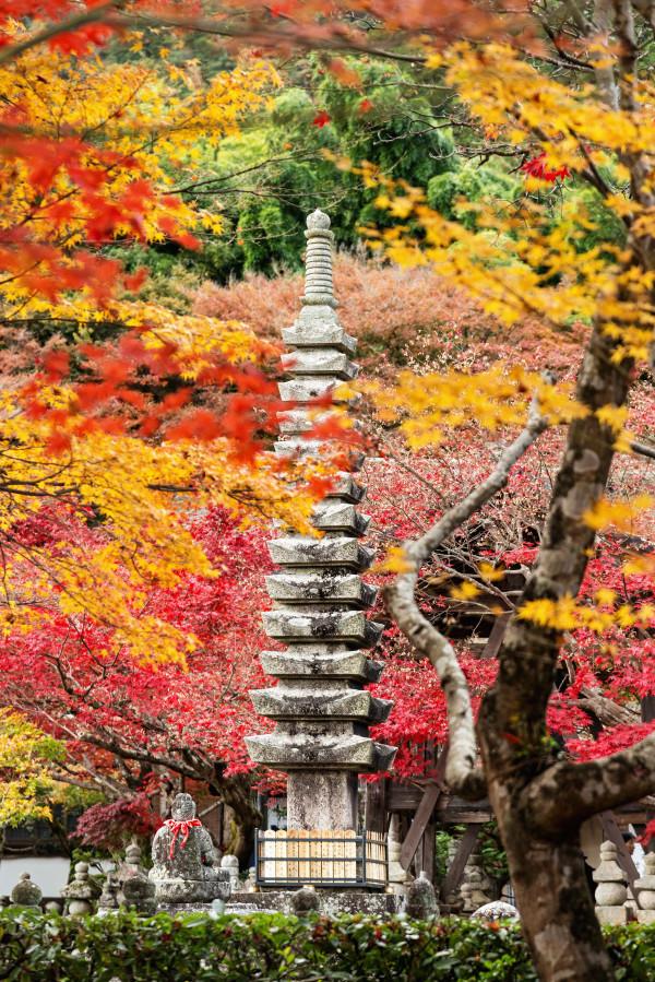 Kyoto_autumn_27