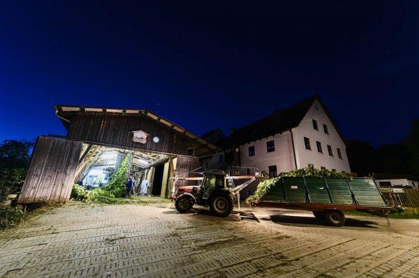 hallertau_hop_beer_bavaria_linkel_DSC3517
