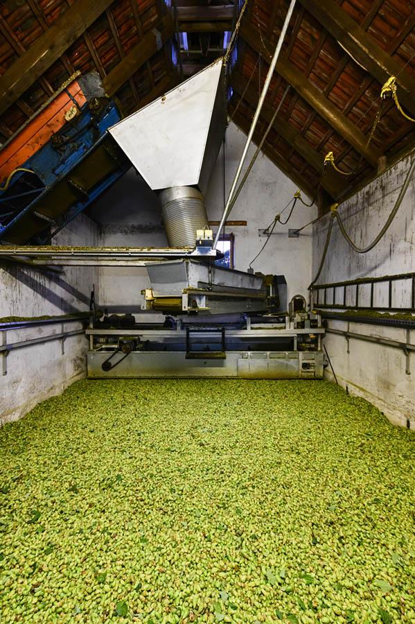 hallertau_hop_beer_bavaria_linkel_DSC3673