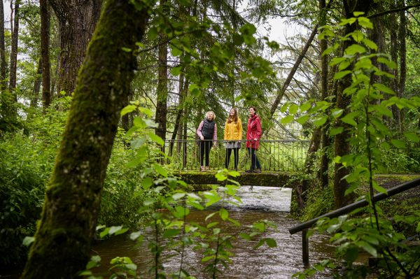 Forest_bathing_bavaria_waldbaden_linkel_DSC_3145