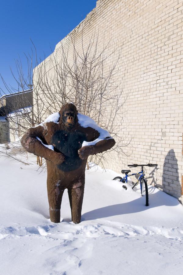 USA, Minnesota, Ely, Gorilla im Schnee, Hinterhof, Winter, Schnee, 3/2009
